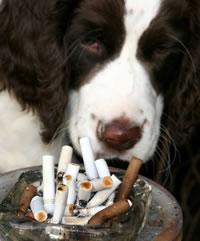 Vorteile des Nichtrauchens für die Gesundheit - niko